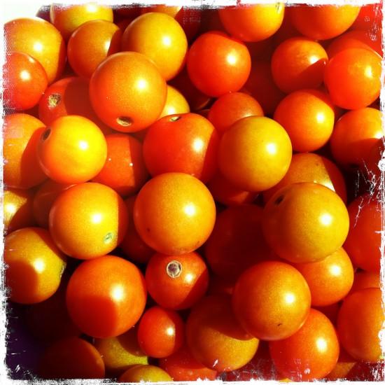 Fall sun gold tomatoes