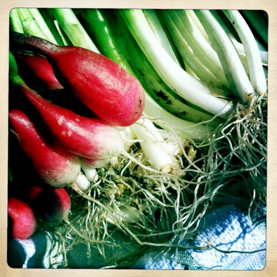 Green onions and radishes